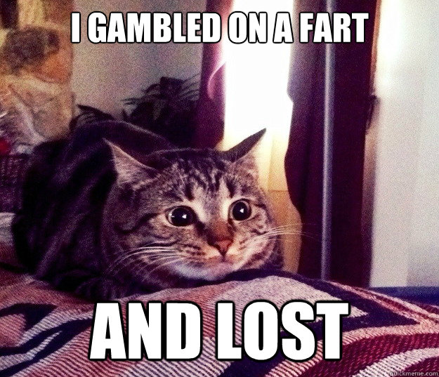i gambled on a fart and lost - i gambled on a fart and lost  slightly shellshocked cat