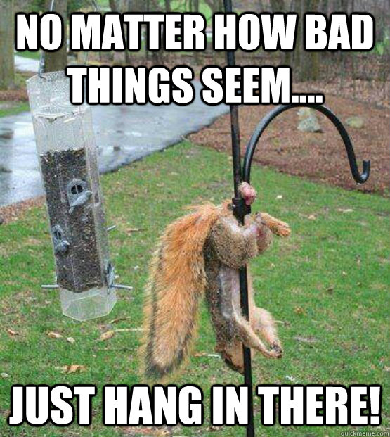 no matter how bad things seem.... just hang in there! - no matter how bad things seem.... just hang in there!  nutty squirrel