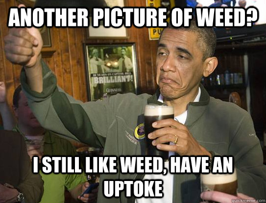 another picture of weed? I still like weed, have an uptoke - another picture of weed? I still like weed, have an uptoke  Upvoting Obama