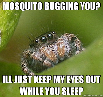 MOSQUITO BUGGING YOU? ILL JUST KEEP MY EYES OUT WHILE YOU SLEEP - MOSQUITO BUGGING YOU? ILL JUST KEEP MY EYES OUT WHILE YOU SLEEP  Misunderstood Spider
