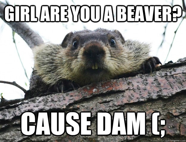 Girl are you a beaver? cause dam (;  beaver