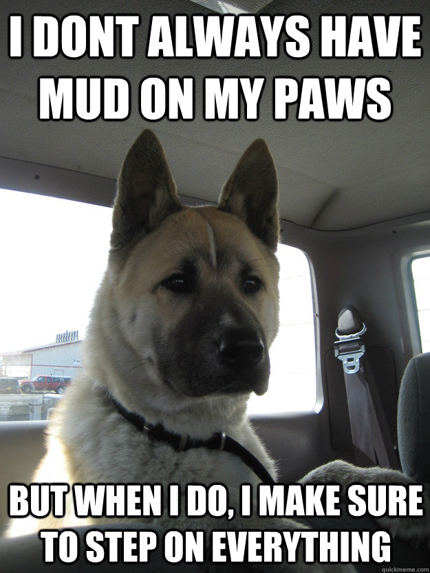 I dont always have mud on my paws but when I do, I make sure to step on everything