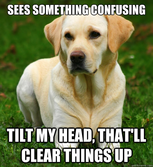 Sees something confusing Tilt my head, that'll clear things up  Dog Logic