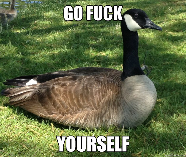 Go Fuck Yourself  Actual Advice Canadian Goose