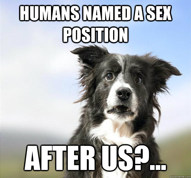 Humans named a sex position after us?... - Humans named a sex position after us?...  Misc