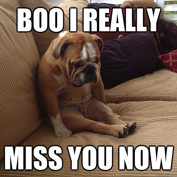 BOO I REALLY Miss you now  depressed dog