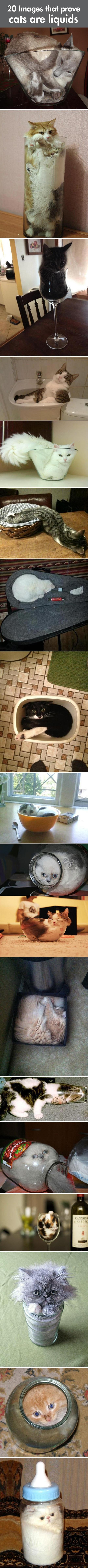Definitive Proof That Cats Are Basically Liquids... -   Misc