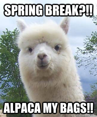 Spring Break?!! Alpaca my bags!! - Spring Break?!! Alpaca my bags!!  Alpaca-pun Alpaca