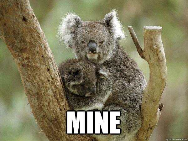 MINE - Clingy Koala - quickmeme  Funny Koala Memes