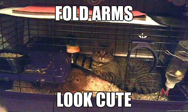 fold arms look cute - fold arms look cute  Suspicious Cat