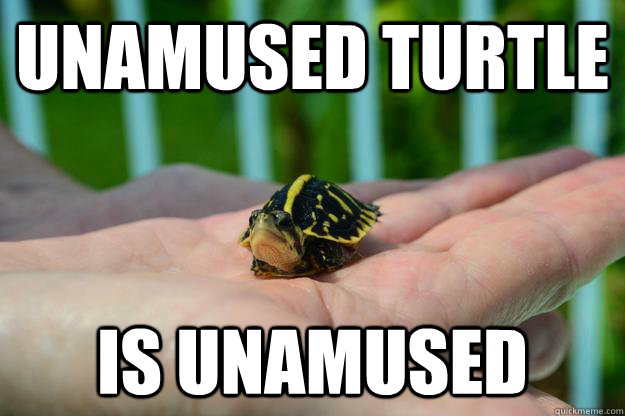 Unamused Turtle is unamused