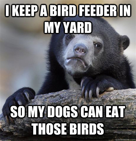 I KEEP A BIRD FEEDER IN MY YARD SO MY DOGS CAN EAT THOSE BIRDS - I KEEP A BIRD FEEDER IN MY YARD SO MY DOGS CAN EAT THOSE BIRDS  Confession Bear
