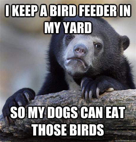 I KEEP A BIRD FEEDER IN MY YARD SO MY DOGS CAN EAT THOSE BIRDS - I KEEP A BIRD FEEDER IN MY YARD SO MY DOGS CAN EAT THOSE BIRDS  Confession Bear