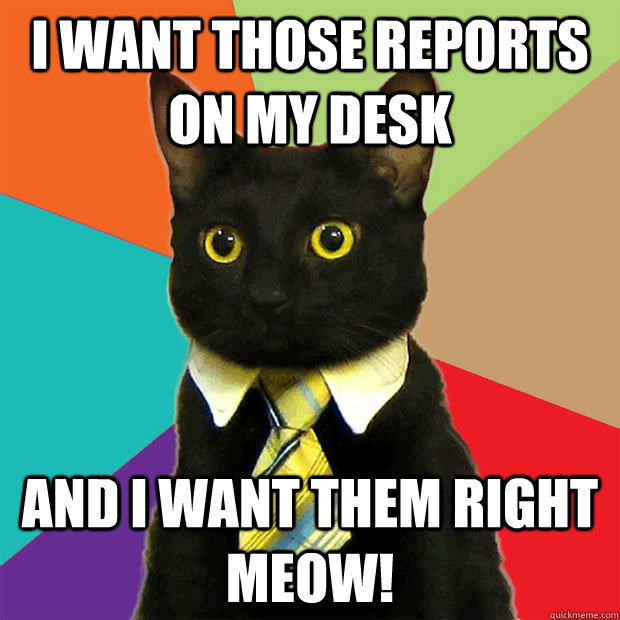 I want those reports on my desk and I want them right meow! - I want those reports on my desk and I want them right meow!  Business Cat