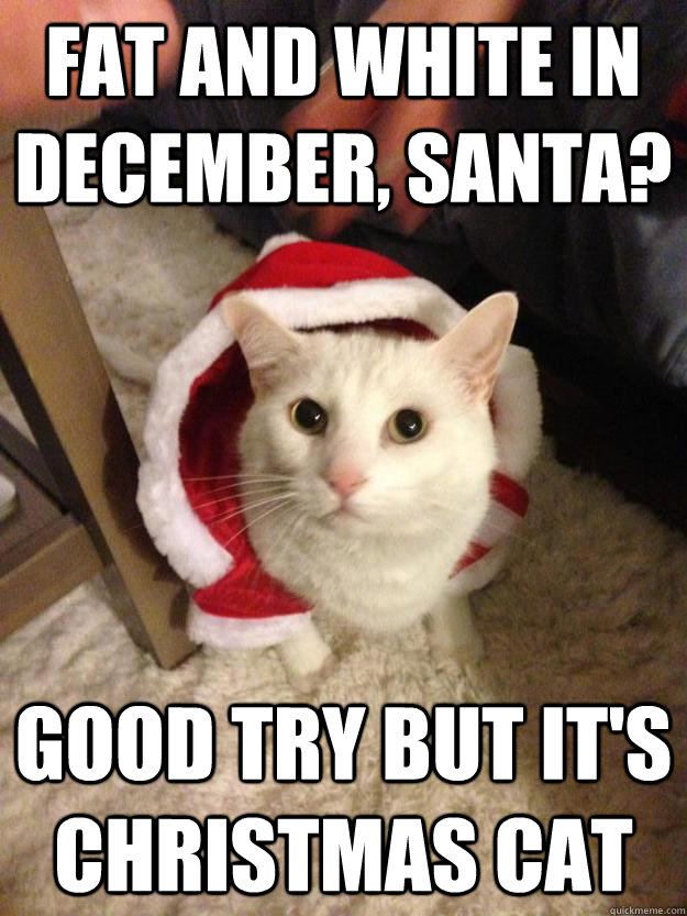 Fat and white in december, Santa? good try but it's christmas cat