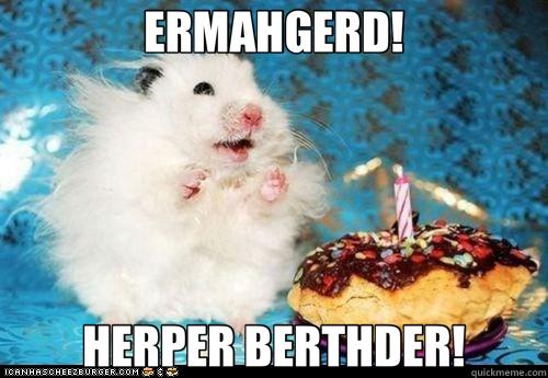 ERMAHGERD! HERPER BERTHDER! - ERMAHGERD! HERPER BERTHDER!  ermahgerd birthday hamster