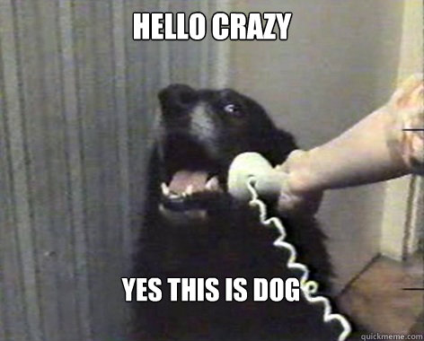 hello crazy yes this is dog  yes this is dog