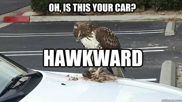 Oh, is this your car?  Hawkward - Oh, is this your car?  Hawkward  Misc
