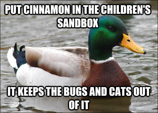 put cinnamon in the children's sandbox it keeps the bugs and cats out of it - put cinnamon in the children's sandbox it keeps the bugs and cats out of it  Actual Advice Mallard