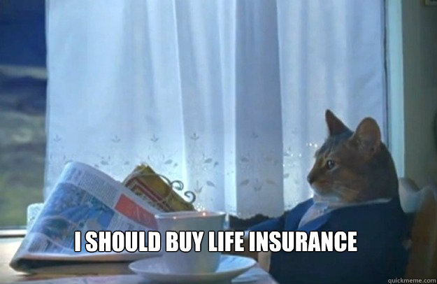 I should buy life insurance  - I should buy life insurance   Sophisticated Cat