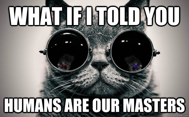 What if i told you Humans are our masters - What if i told you Humans are our masters  Cat morpheus plus paws