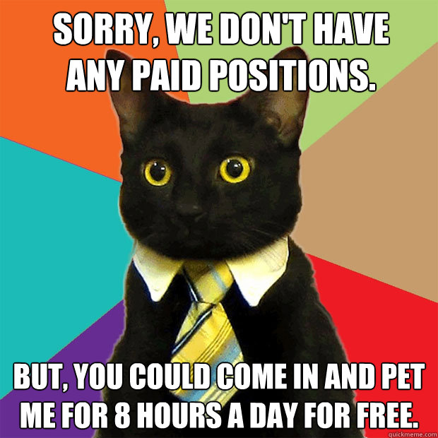 Sorry, we don't have any paid positions. But, you could come in and pet me for 8 hours a day for free. - Sorry, we don't have any paid positions. But, you could come in and pet me for 8 hours a day for free.  Business Cat