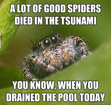 A lot of good spiders died in the tsunami you know, when you drained the pool today - A lot of good spiders died in the tsunami you know, when you drained the pool today  Misunderstood Spider