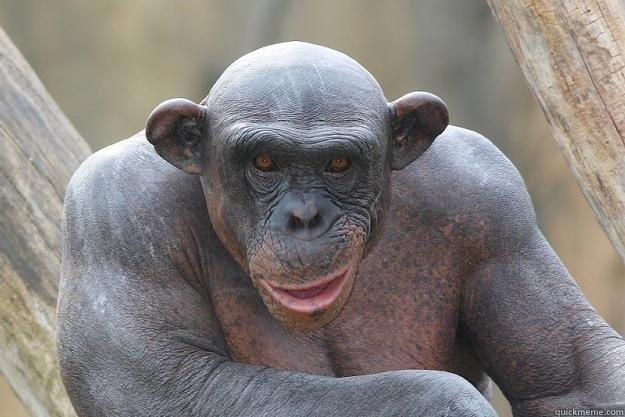 The Most Interesting Chimp In The World