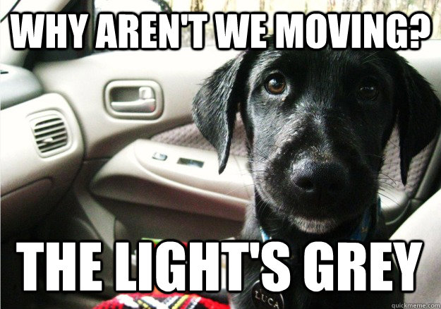 WHY AREn't we moving? the light's grey - WHY AREn't we moving? the light's grey  Back seat dog