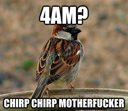 4AM? Chirp Chirp motherfucker - 4AM? Chirp Chirp motherfucker  scumbag bird