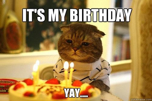 Funny Meme Yay : It s my birthday yay cat quickmeme