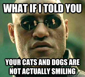 what if i told you your cats and dogs are not actually smiling - what if i told you your cats and dogs are not actually smiling  Matrix Morpheus