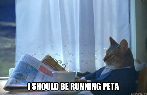 I should be running PETA - I should be running PETA  Sophisticated Cat
