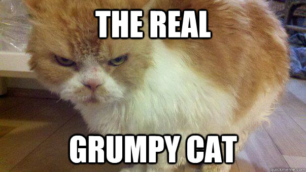 The real Grumpy Cat - The real Grumpy Cat  Misc