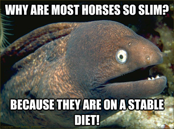 Why are most horses so slim? Because they are on a stable diet!  Bad Joke Eel