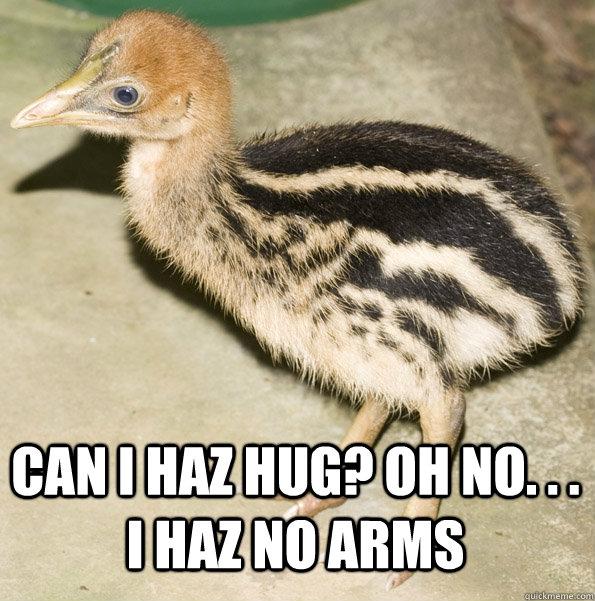 Can i haz hug? oh no. . . I haz no arms  Caitlin Cassowary