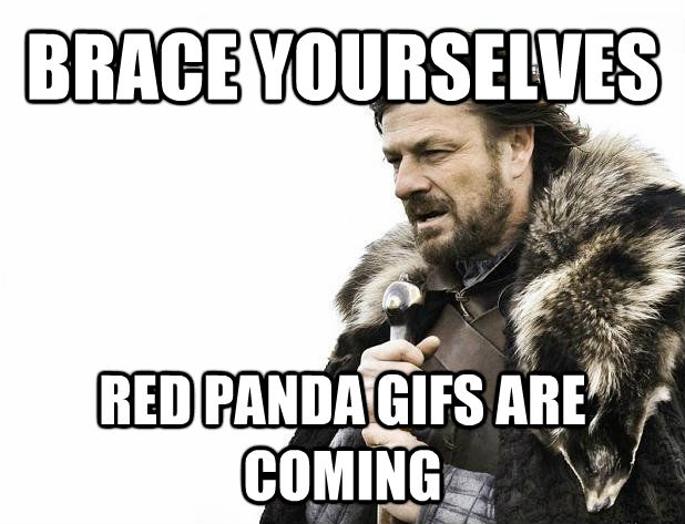 BRACE YOURSELVES  RED PANDA GIFS ARE COMING - BRACE YOURSELVES  RED PANDA GIFS ARE COMING  Misc