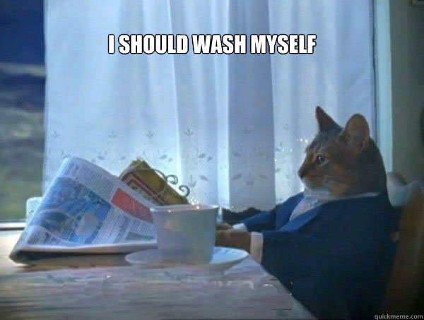 I should wash myself  - I should wash myself   morning realization newspaper cat meme