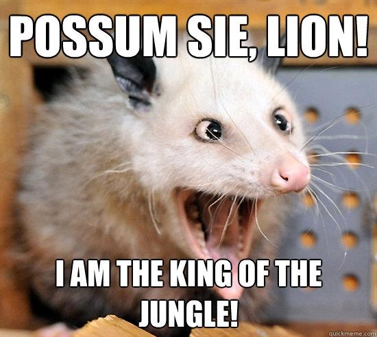 Cross eyed opossum