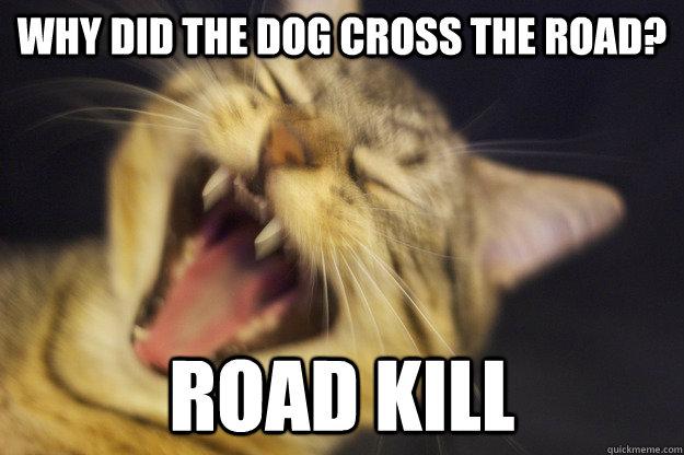 Why did the dog cross the road? Road kill  Evil Joke Cat