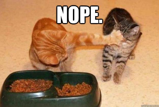Nope Cat Memes Quickmeme