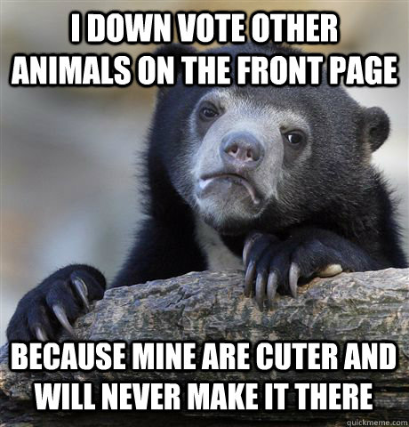 I DOWN VOTE OTHER ANIMALS ON THE FRONT PAGE BECAUSE MINE ARE CUTER AND WILL NEVER MAKE IT THERE - I DOWN VOTE OTHER ANIMALS ON THE FRONT PAGE BECAUSE MINE ARE CUTER AND WILL NEVER MAKE IT THERE  Confession Bear