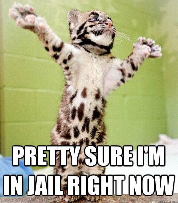 pretty sure I'm in jail right now - pretty sure I'm in jail right now  PastorCat