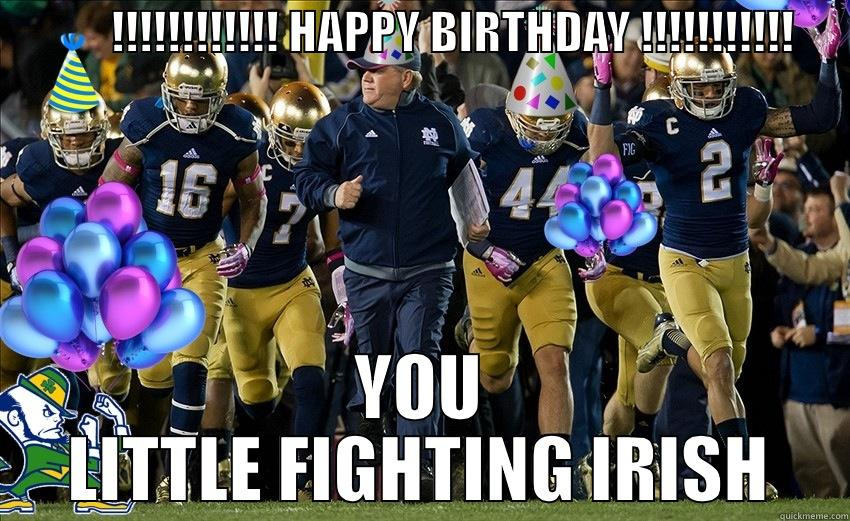 ND Fighting Irish for Harold's DB -             !!!!!!!!!!!! HAPPY BIRTHDAY !!!!!!!!!!!       YOU LITTLE FIGHTING IRISH Misc