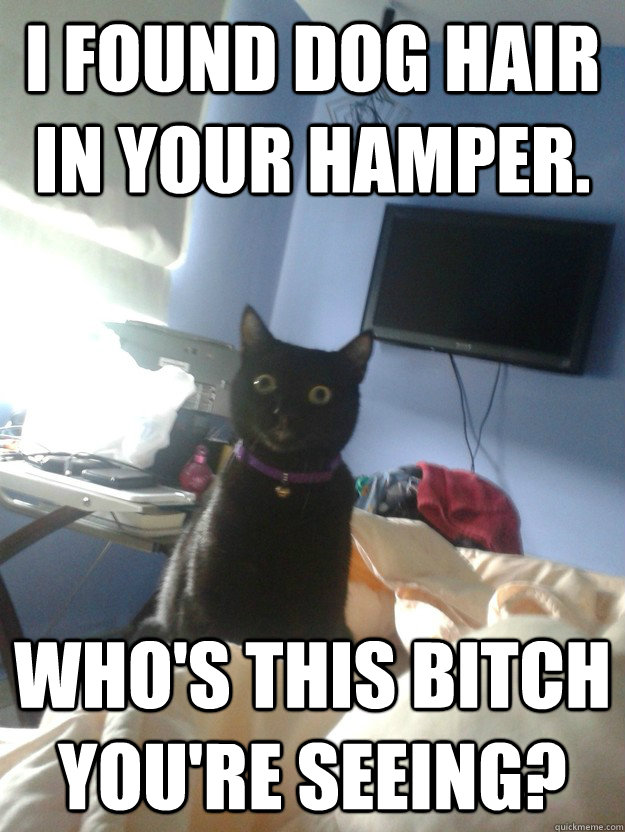 i found dog hair in your hamper. who's this bitch you're seeing? - i found dog hair in your hamper. who's this bitch you're seeing?  overly attached cat