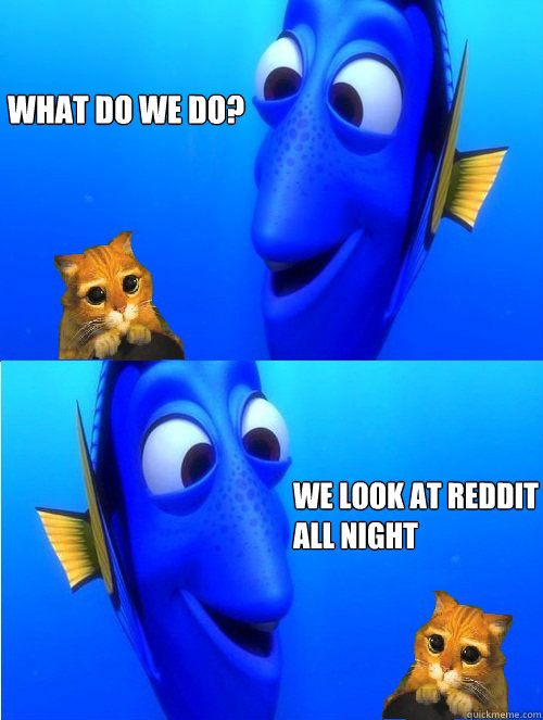 what do we do? we look at reddit all night  - what do we do? we look at reddit all night   dory