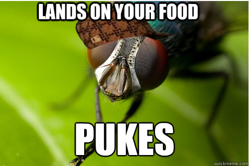 Lands on your food pukes - Lands on your food pukes  Scumbag Fly