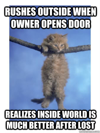 rushes outside when owner opens door realizes inside world is much better after lost  Hang In There Kitty