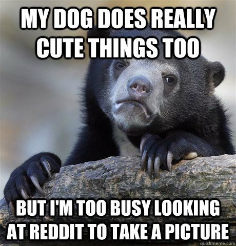 my dog does really cute things too But i'm too busy looking at reddit to take a picture - my dog does really cute things too But i'm too busy looking at reddit to take a picture  Confession Bear
