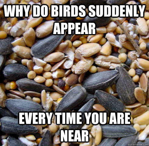 Why do birds suddenly appear every time you are near